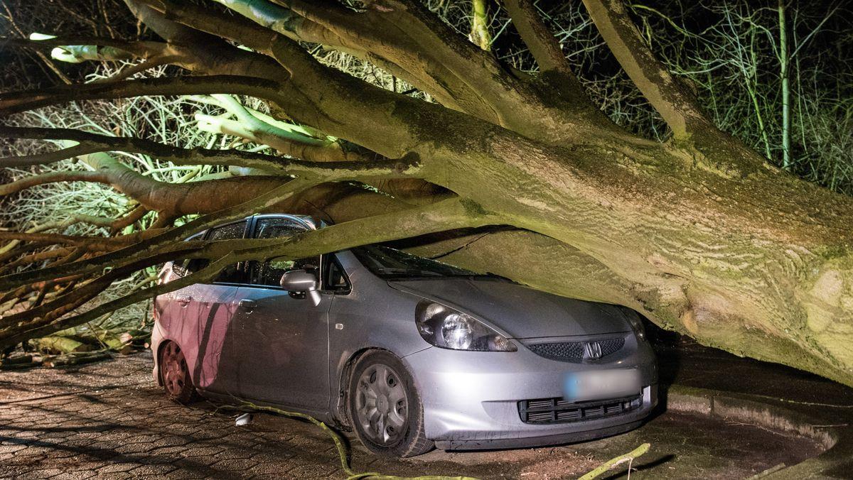 Ein umgestürzter Baum liegt in Hamburg auf einem Parkplatz auf einem Auto.