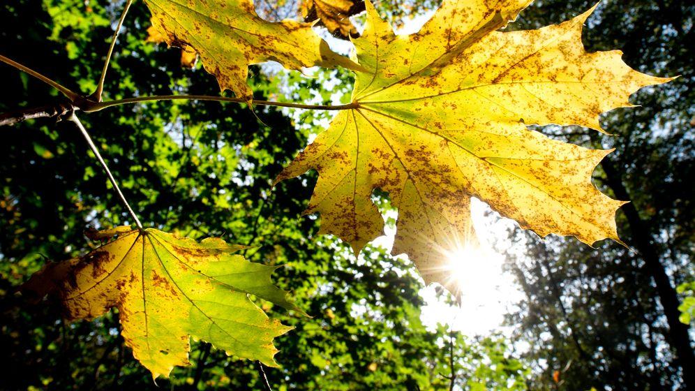 Sonne im Herbstwald | Bild:dpa-Bildfunk/Hauke-Christian Dittrich