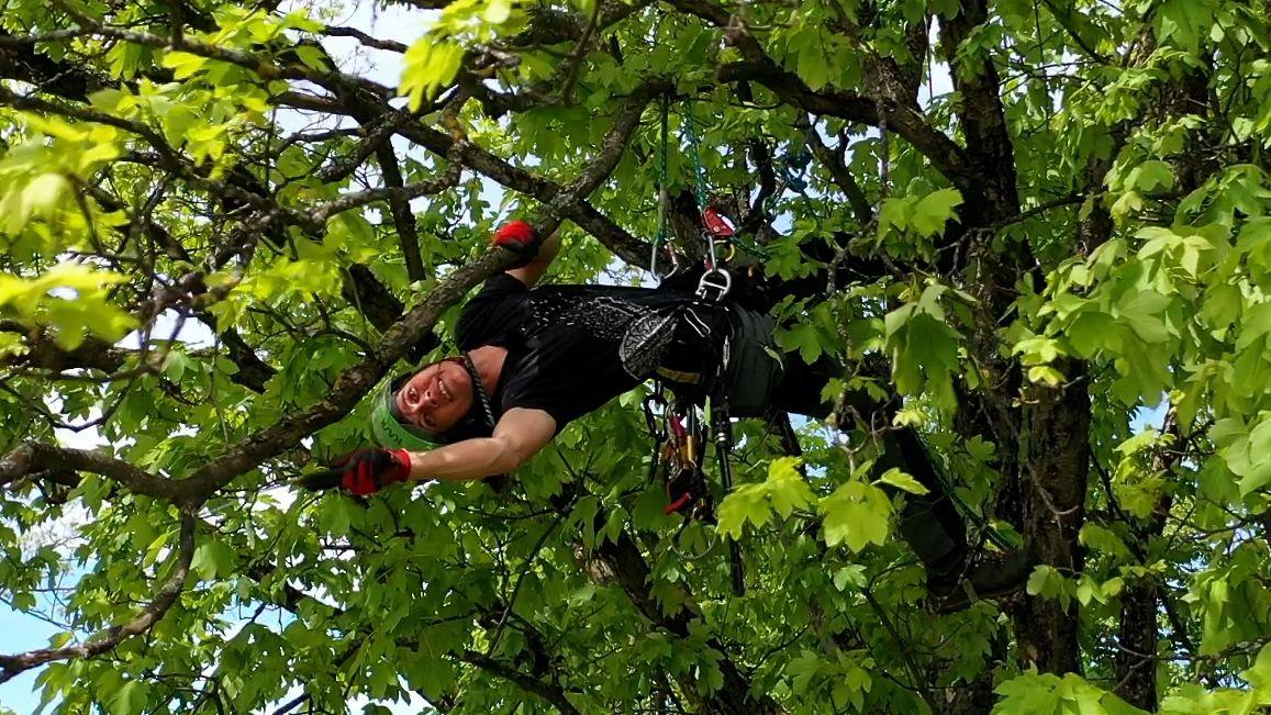 Eine Baumpflegerin hängt in einem Baum