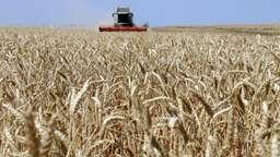 Ein Mähdrescher erntet Weizen | Bild:dpa-Bildfunk/ Foto: Peter Förster