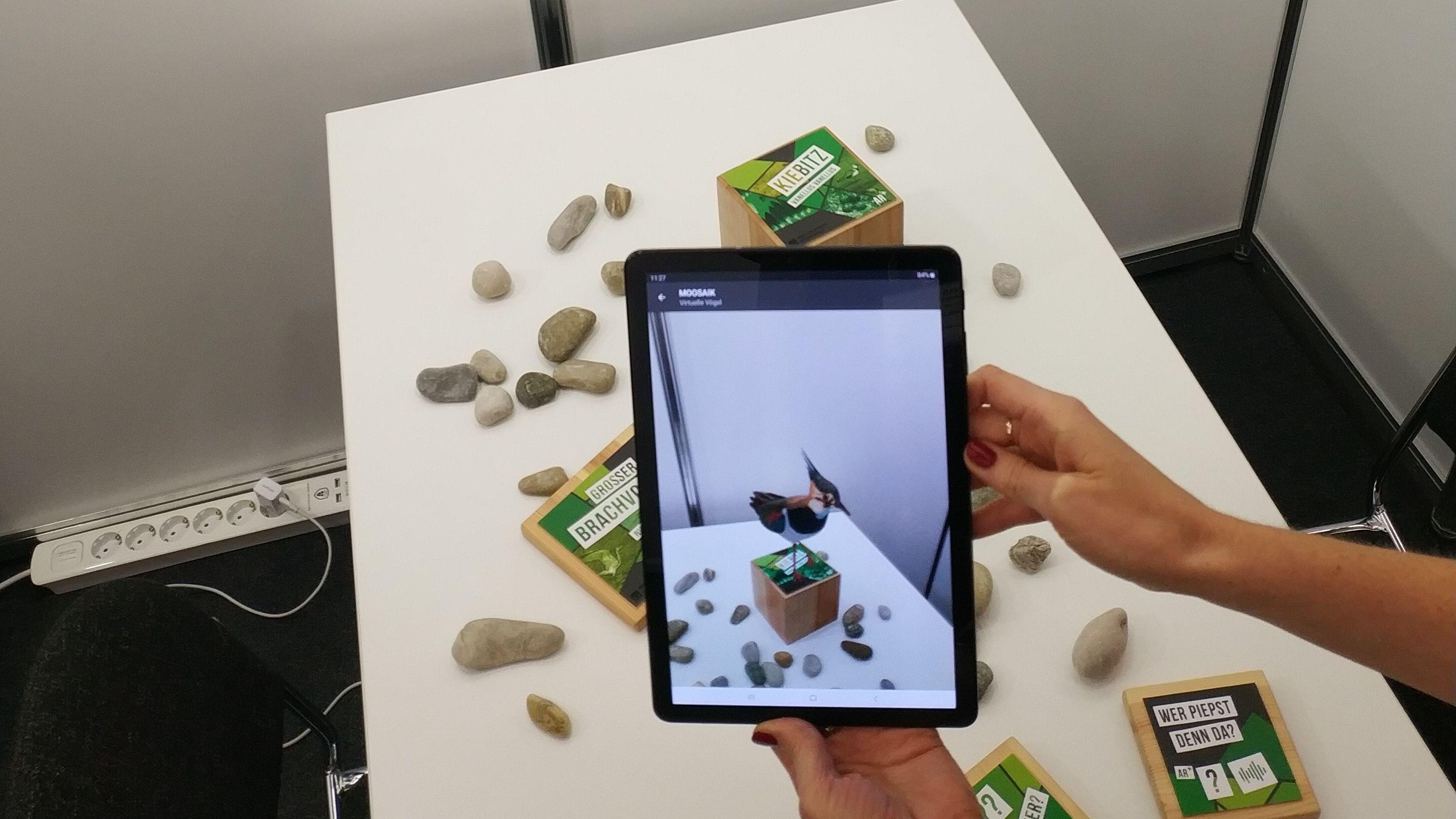 Eine Augmented-Reality-App reichert die Realität (Tisch) mit einem Kiebitz an. Der Vogel wird lebensgroß dargestellt und bewegt sich.