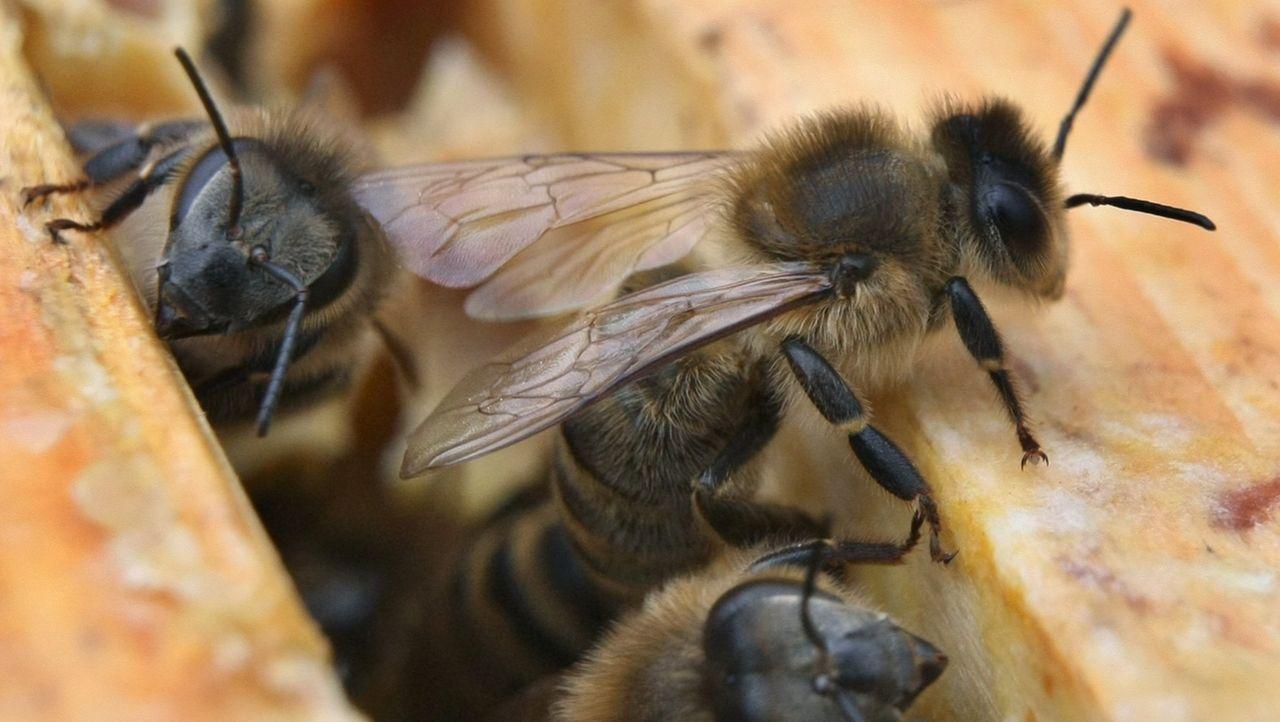 Bienen krabbeln aus einem Bienenstock heraus