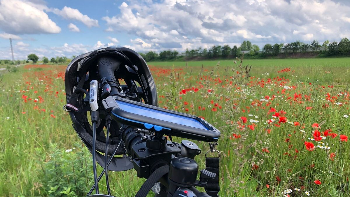 Fahrrad vor Mohnblumenfeld
