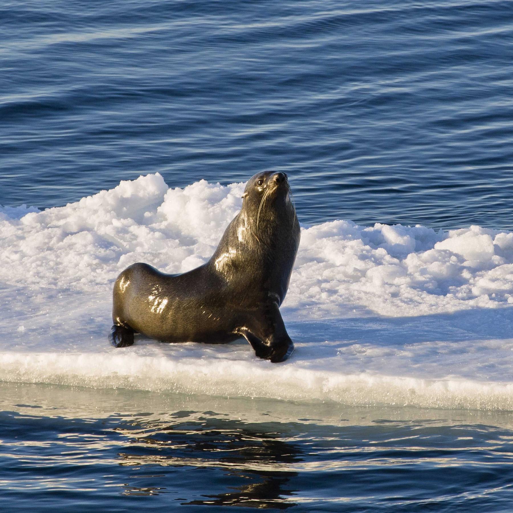 Empfindliches Ökosystem - Entsteht in der Antarktis das größte Meeresschutzgebiet aller Zeiten?