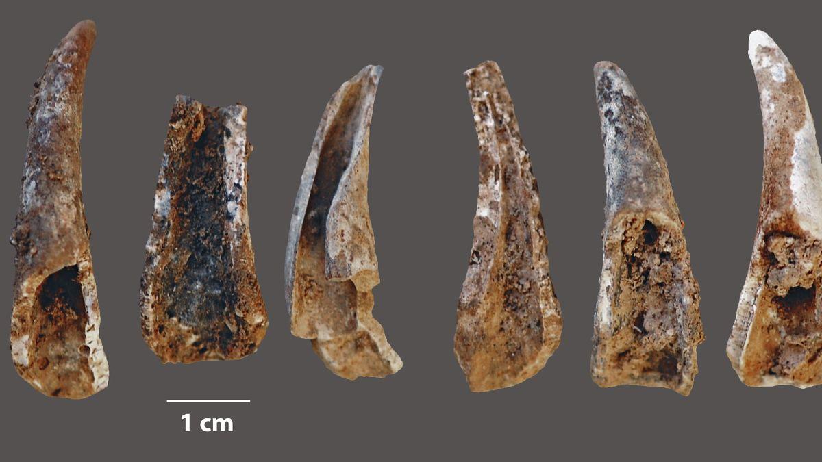 Fossilien von Krabbenzangen.
