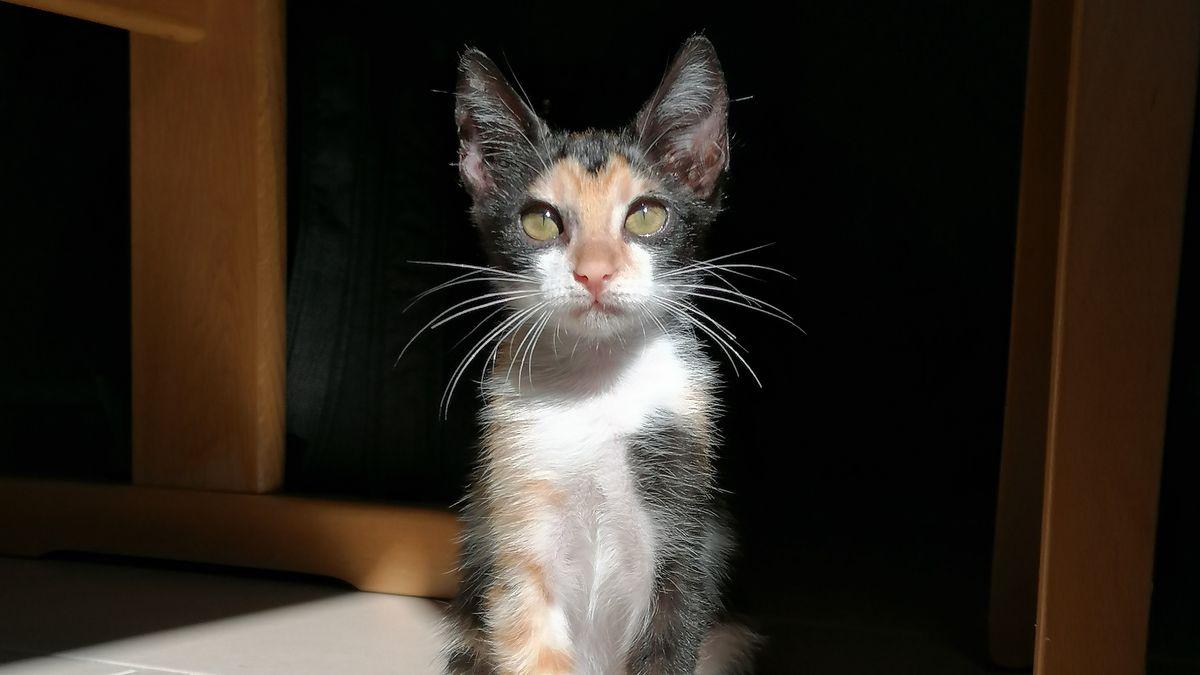 Die tunesische Katze Felicità