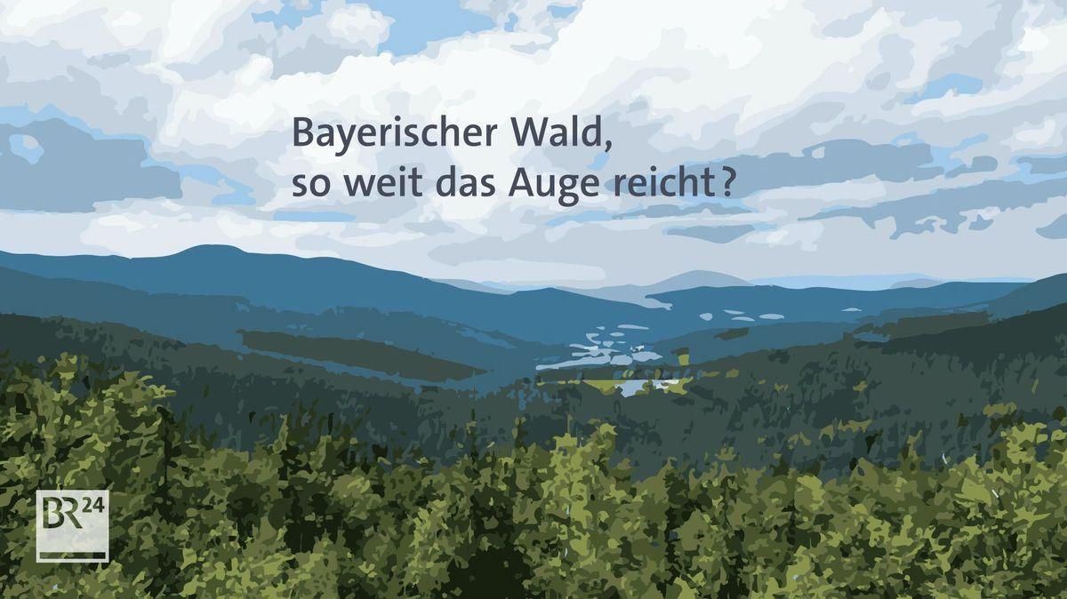 Aufforstung in Bayern. Wo sollen die neuen Bäume hin?