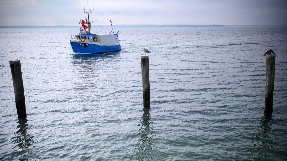 SOS für die Ostsee- Fischbestände schrumpfen immer mehr