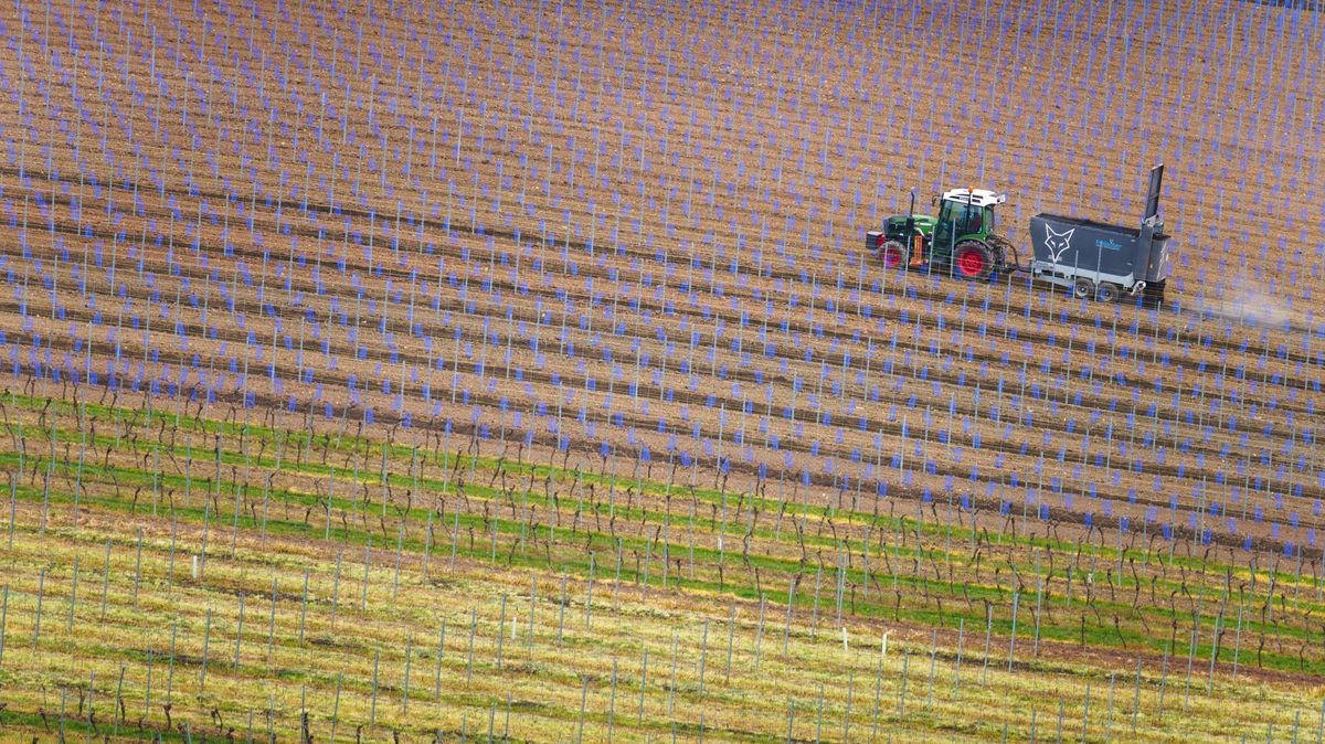 Ein Landwirt bringt in einem frisch angelegten Weinberg am Ortsrand Humus aus.