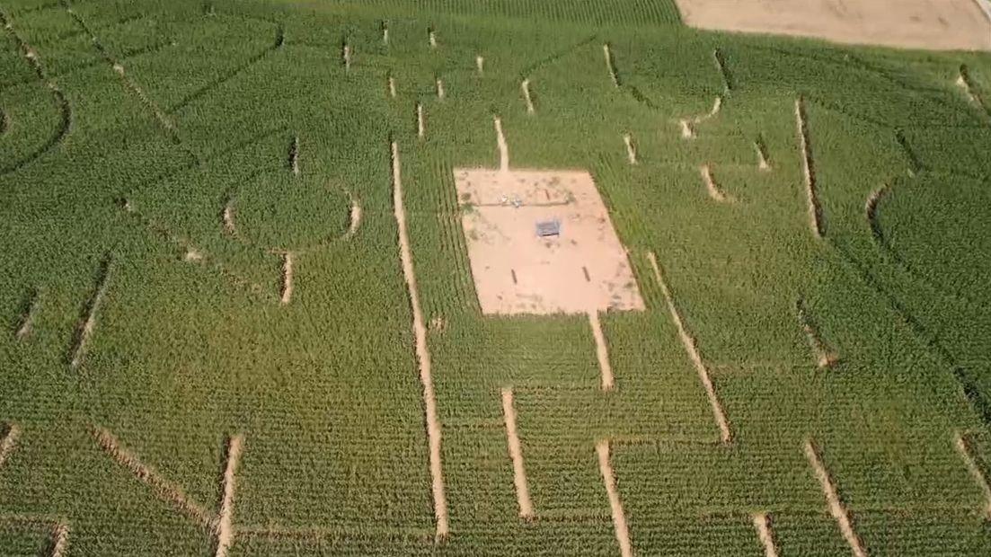Maislabyrinth von oben