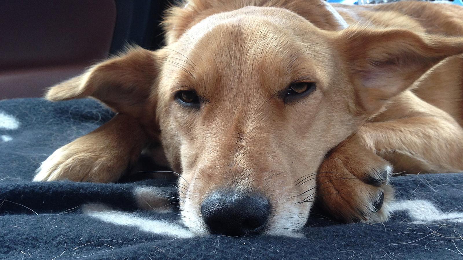 Drei Wochen In Den Bergen Verschwunden Hund Teddy Zurück Br24