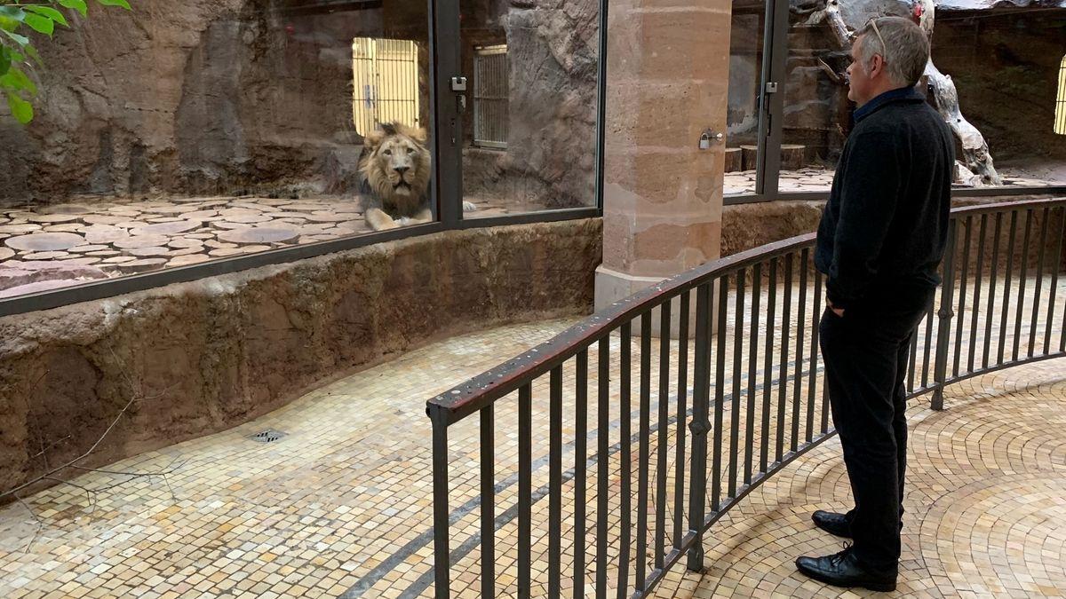 Tiergarten-Chef Dag Encke verteidigt die Diskussion über die mögliche Tötung von Löwe Subali.
