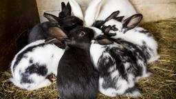 Immer dasselbe in den Ferien: Tiere aller Arten werden ausgesetzt und landen im Tierheim. | Bild:picture-alliance/dpa