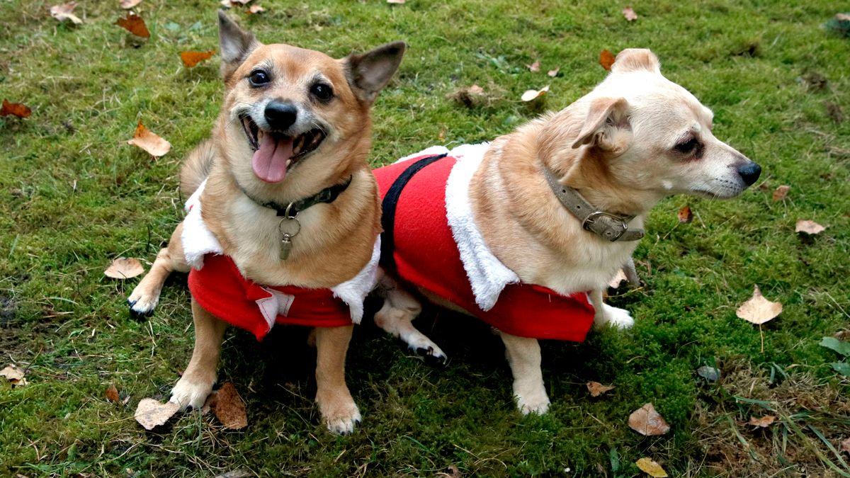 Tiere sind kein Spielzeug und sollten zu Weihnachten nicht einfach so verschenkt werden.