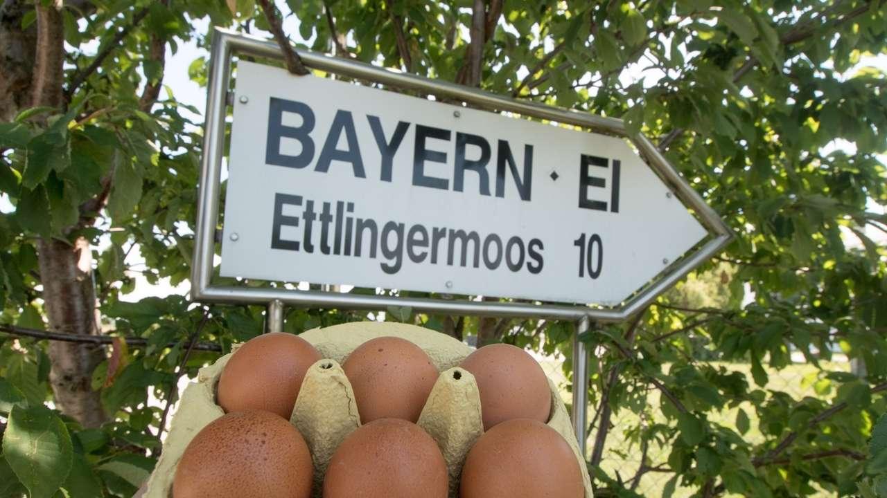 Die Anklage gegen den ehemaligen Geschäftsführer der niederbayerischen Firma Bayern-Ei zur Hauptverhandlung ist zugelassen.