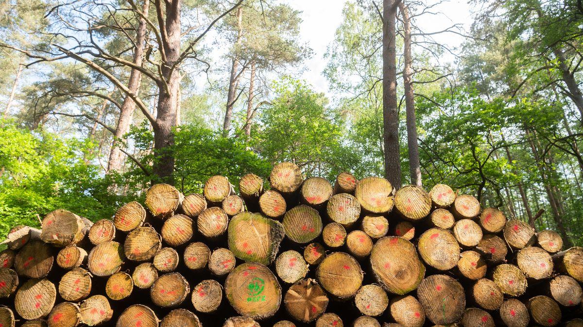 Bäume liegen in einem Wald (Symbolbild)