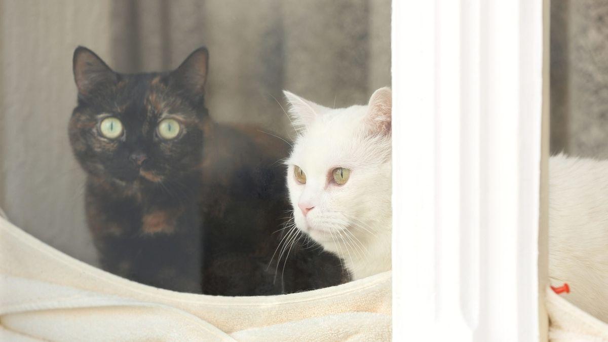 Zwei Katzen schauen aus dem Fenster