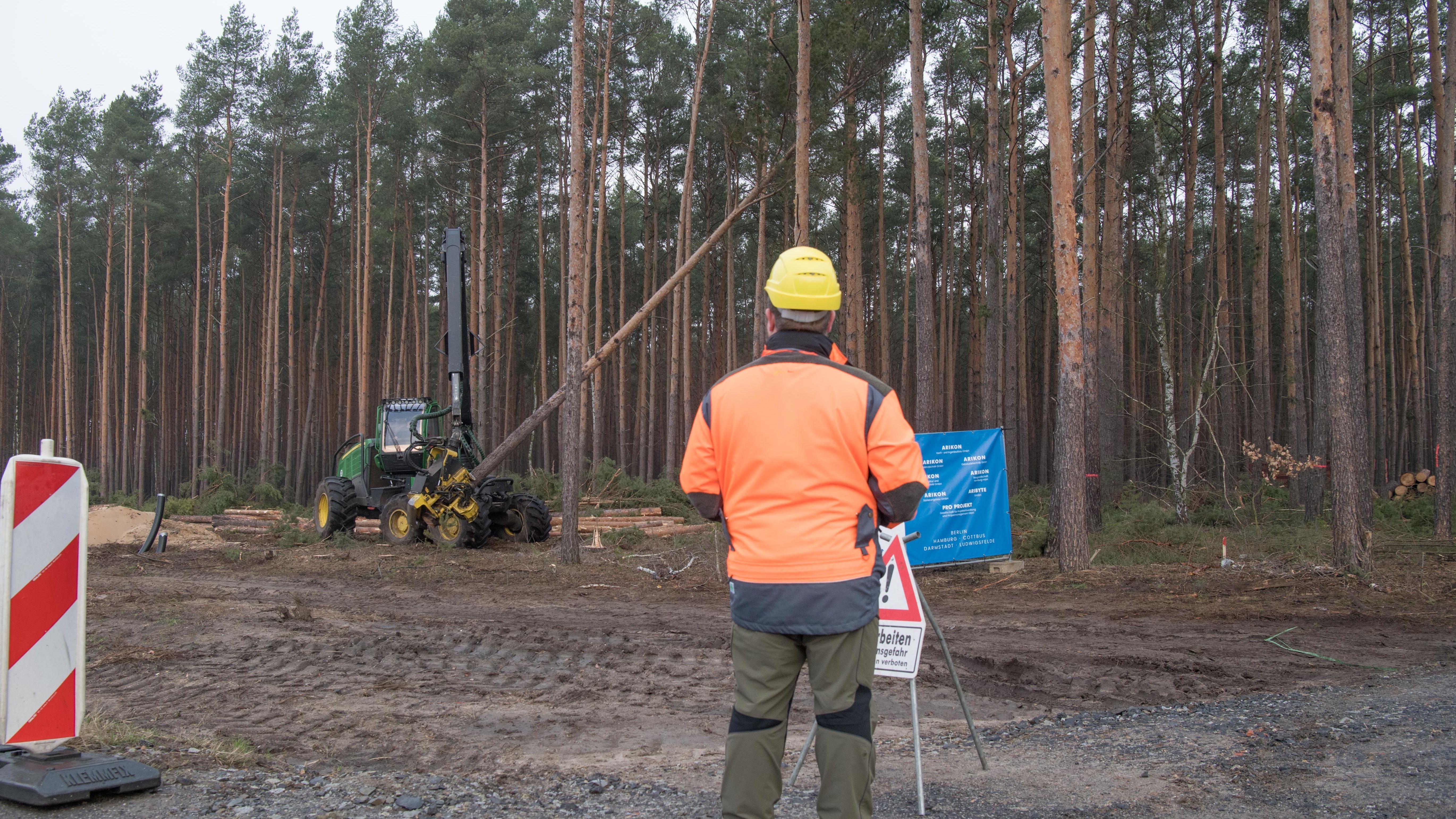 Mit einem Holzvollernter werden Bäume gefällt. Der US-Elektroautobauer Tesla lässt für sein neues Werk in Grünheide den Wald roden.