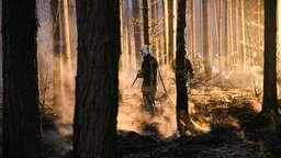 Waldbrandgefahr: Regierung ordnet Beobachtungsflüge an | Bild:Julian Stähle/dpa picture alliance
