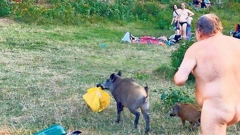 Wildschweinfamilie stört FKK-Bader