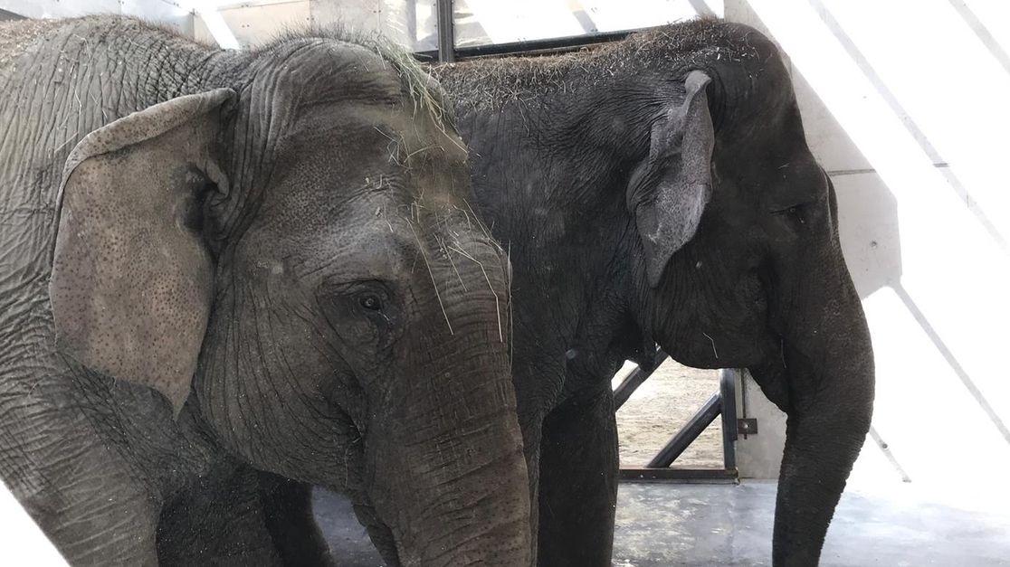 Neue Elefanten im Augsburger Zoo