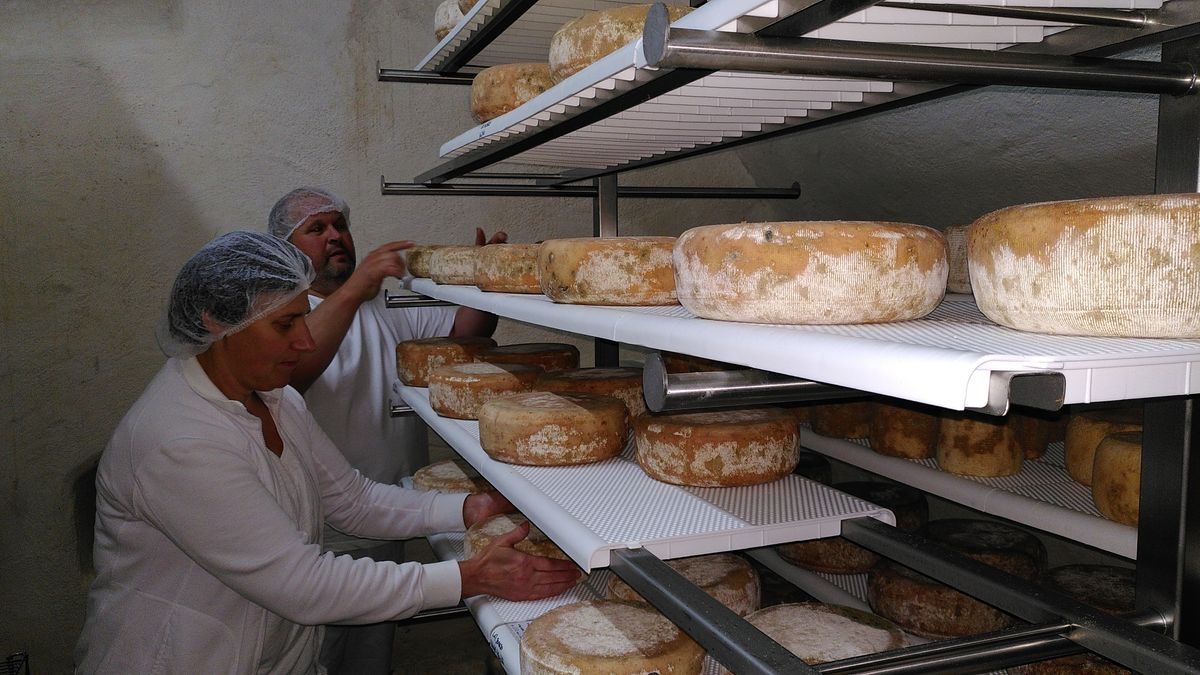Unterfränkischer Landwirt wagt Neuanfang mit Käse