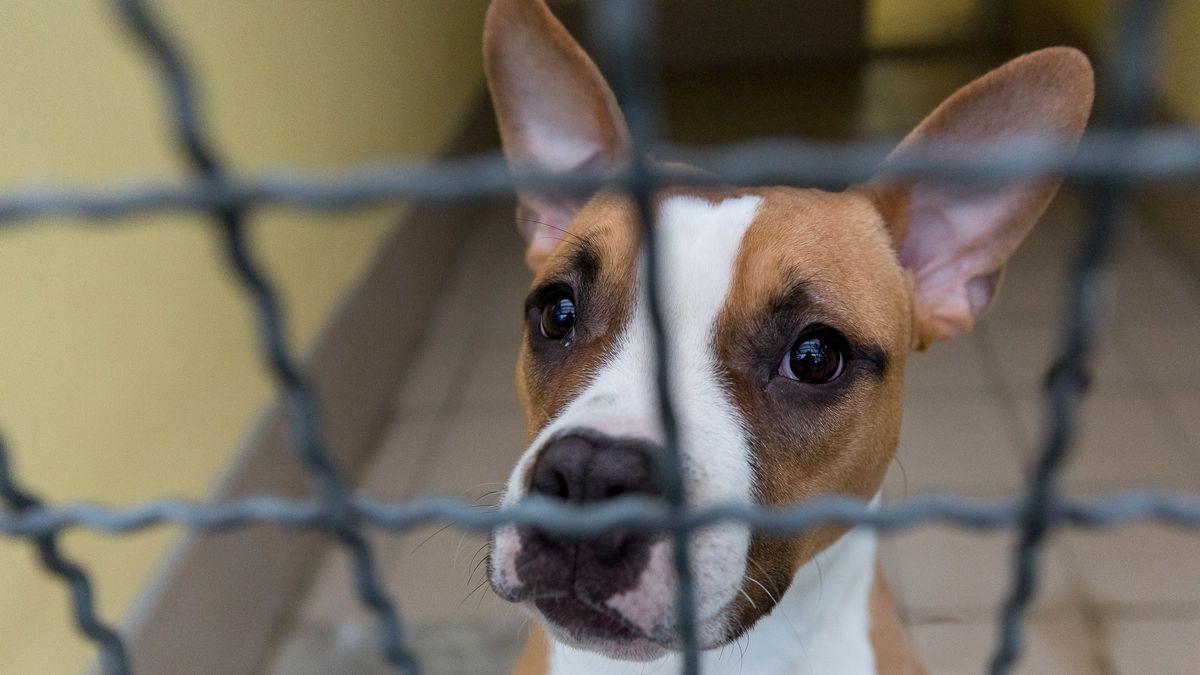 Hundewelpe hinter Gittern (Symbolbild)