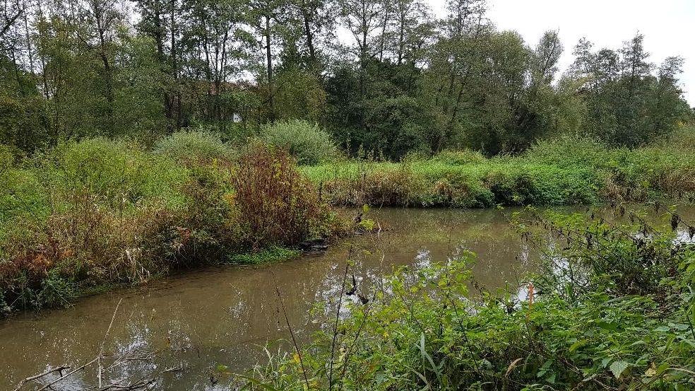 Hier im Bereich des Mertsees in Eggenfelden war da Ehepaar tot aufgefunden worden.