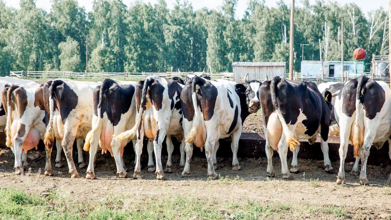 Fragt man die Deutschen, wünschen sie sich kleinere Bauernhöfe. Doch immer mehr kleinbäuerliche Höfe geben auf. Der Agrar-Atlas 2019 gibt daran nicht zuletzt der EU-Agrarpolitik die Schuld und fordert eine grundlegende Reform.