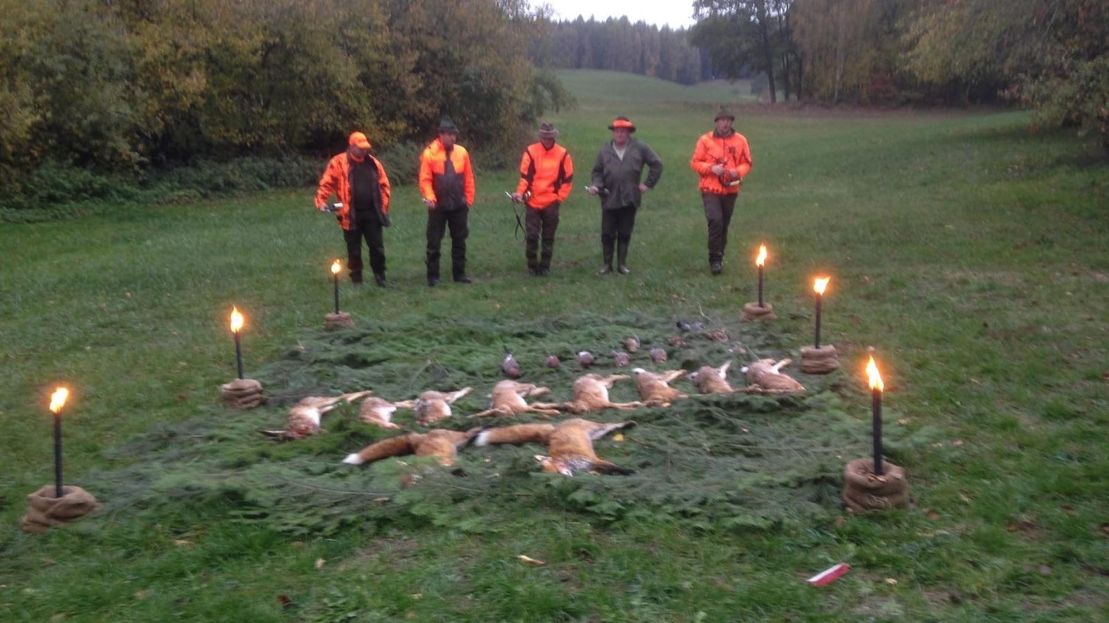 Jäger haben bei einer Treibjagd acht Hasen erlegt