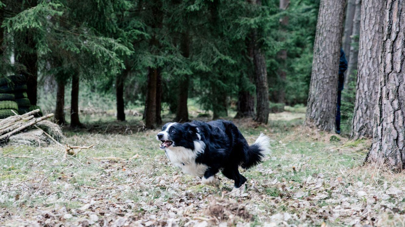 Wenn Hunde Wildtiere jagen, dürfen Jäger unter bestimmten Bedingungen schießen.