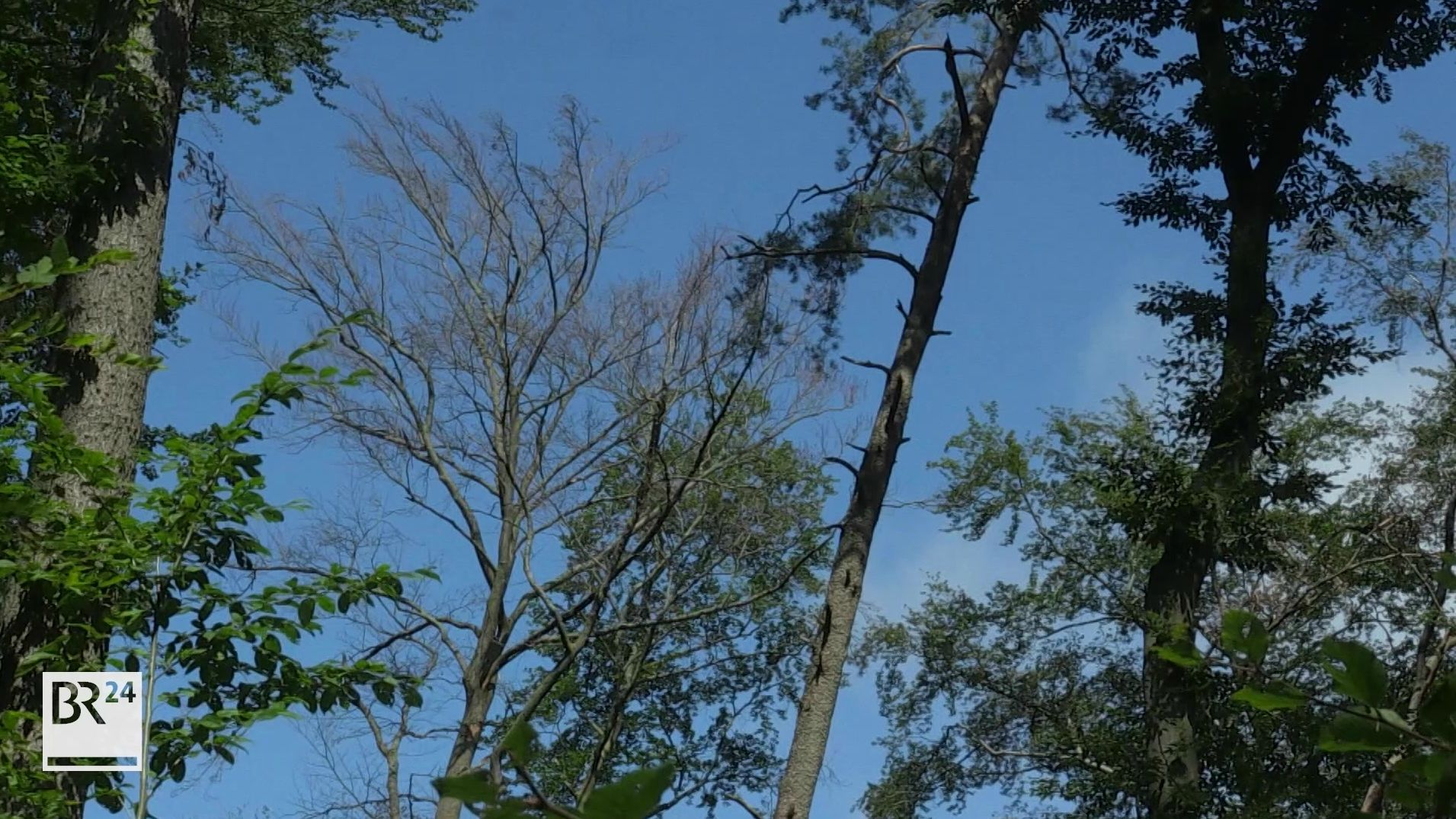 Waldschäden bei Bamberg