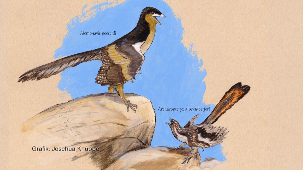Forscher haben die Fossilien eines bislang unbekannten Urvogels entdeckt, dem Alcmonavis poeschli. Er war vermutlich größer und besser flugfähig als der Archaeopteryx.