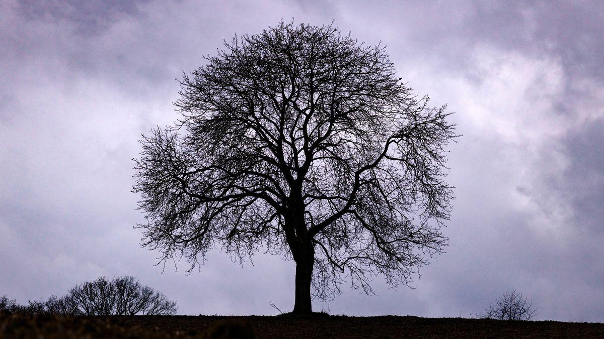 Wer weitere Äste am eigenen Stammbaum hinzufügen möchte, muss sich meist mühevoll durch Archive wühlen.