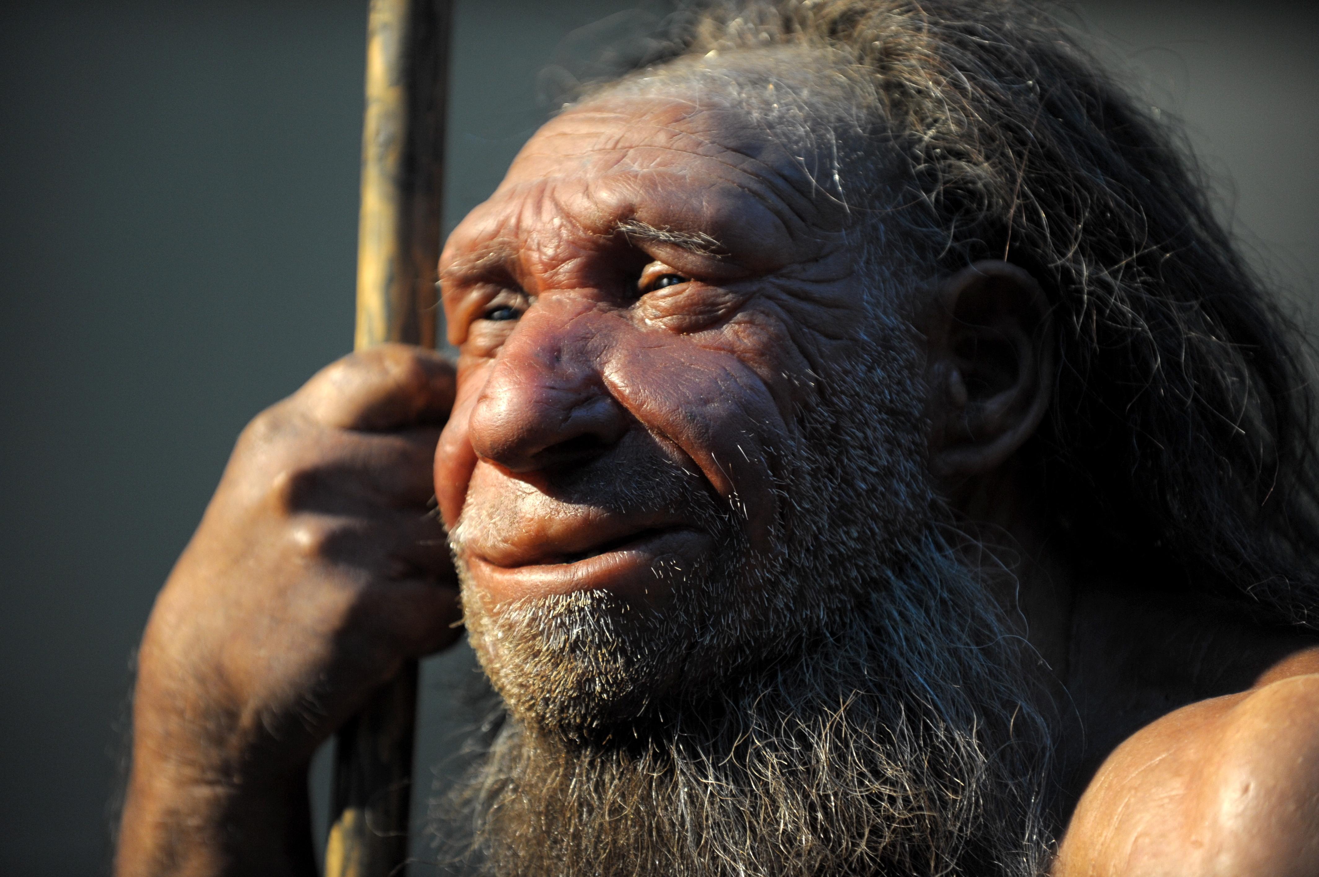 Neandertaler Haben Das Immunsystem Des Menschen Gestärkt Br24
