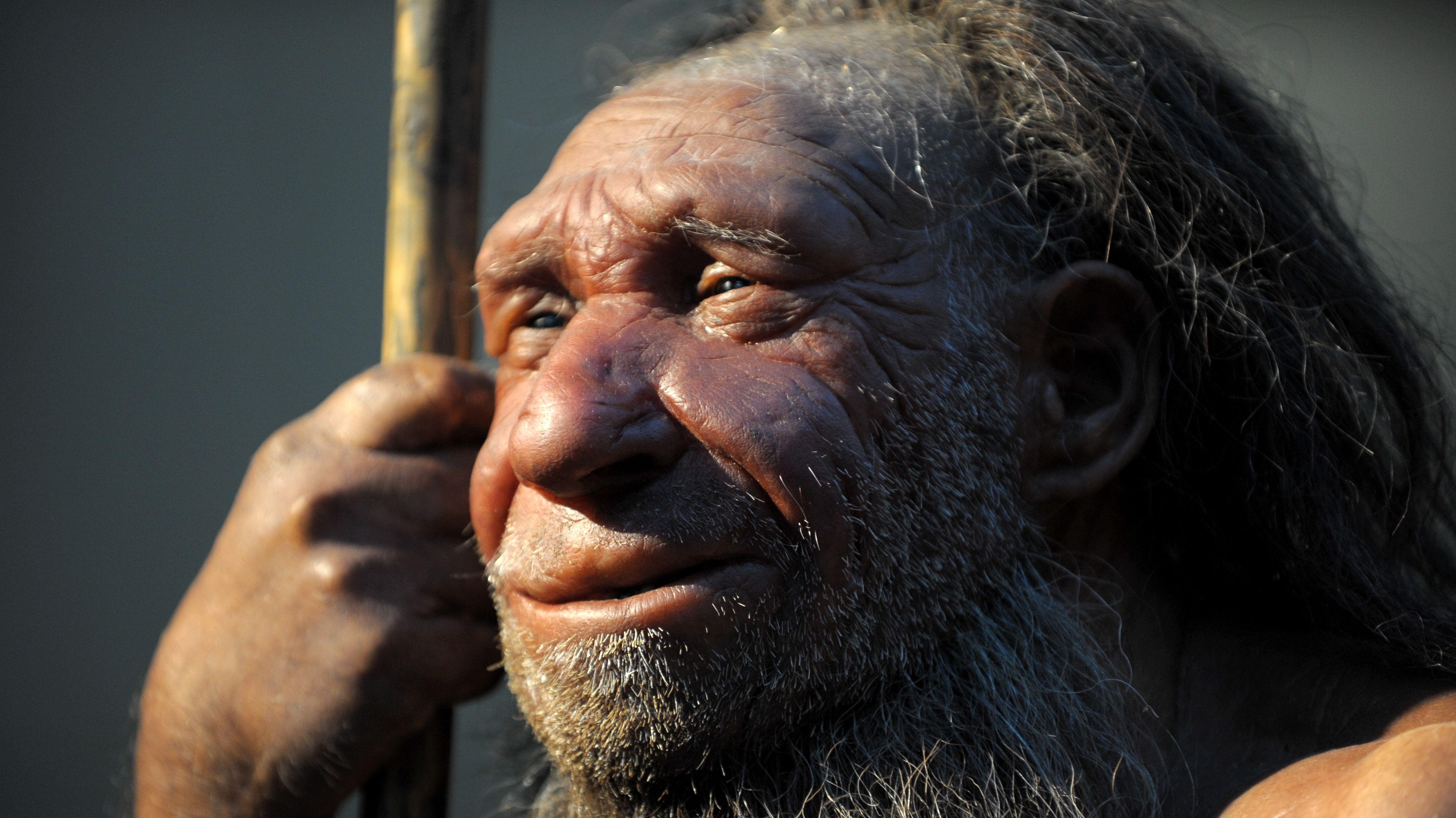 Die Nachbildung eines älteren Neandertalers im Neanderthal-Museum in Mettmann.