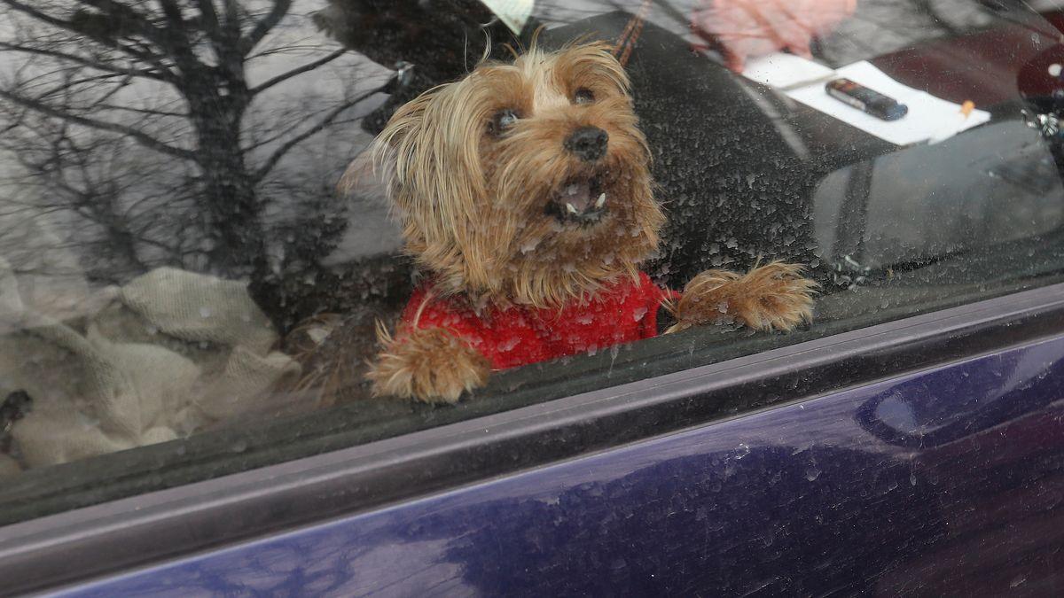 Symbolbild Hund im Auto