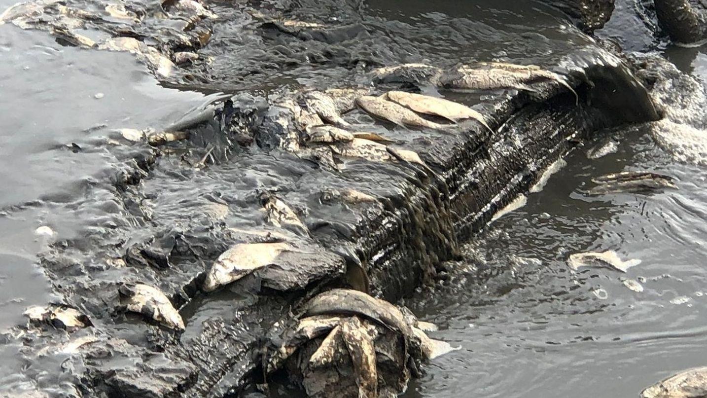"Fischsterben im Sonnensee war ""totaler Unglücksfall"""