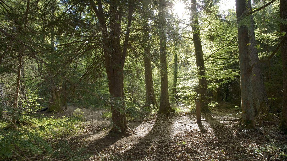 Der Eibenwald von Paterzell
