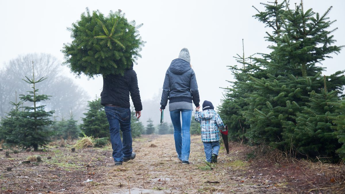 Familie trägt Christbaum nach Hause
