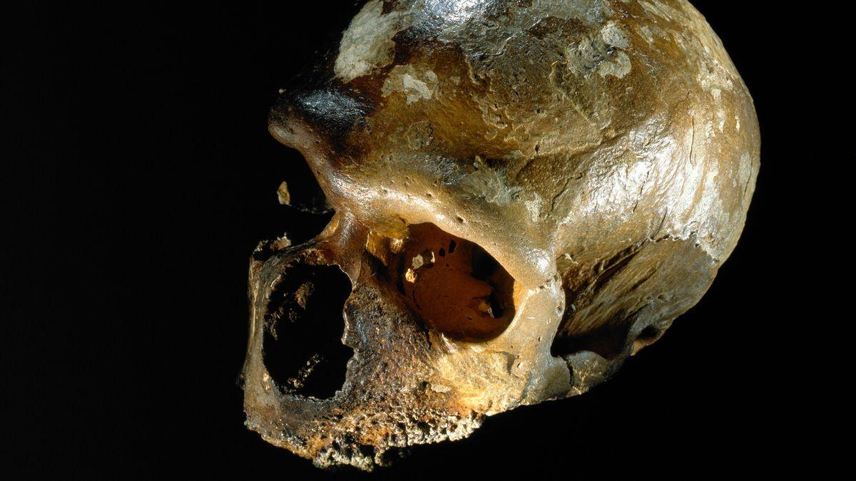 Neandertaler-Schädel aus der Guattari-Höhle.