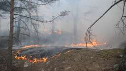 Waldbrände in Schweden | Bild:BR24