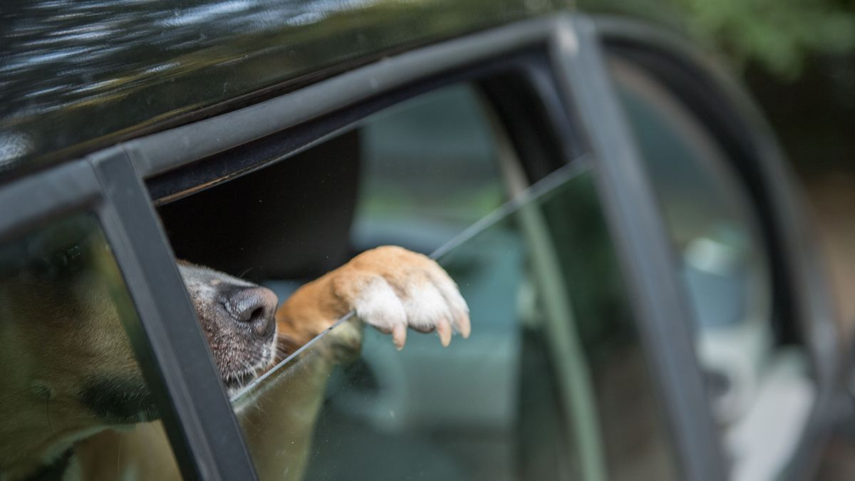 Ein Hund streckt seine Pfote aus dem Autofenster (Symbolbild).