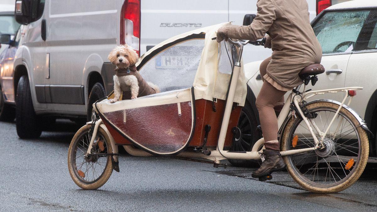 Lastenfahrräder bieten vielseitige Transportoptionen