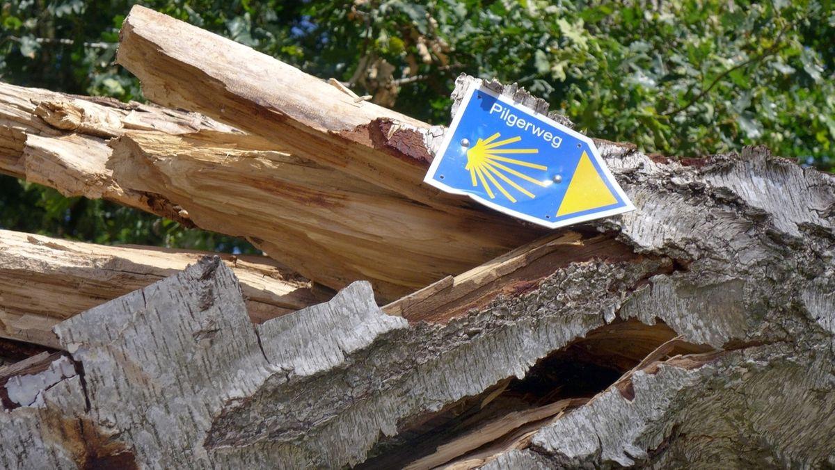 Wanderzeichen des Jakob-Pilgerweges an einem gebrochenen Baumstamm