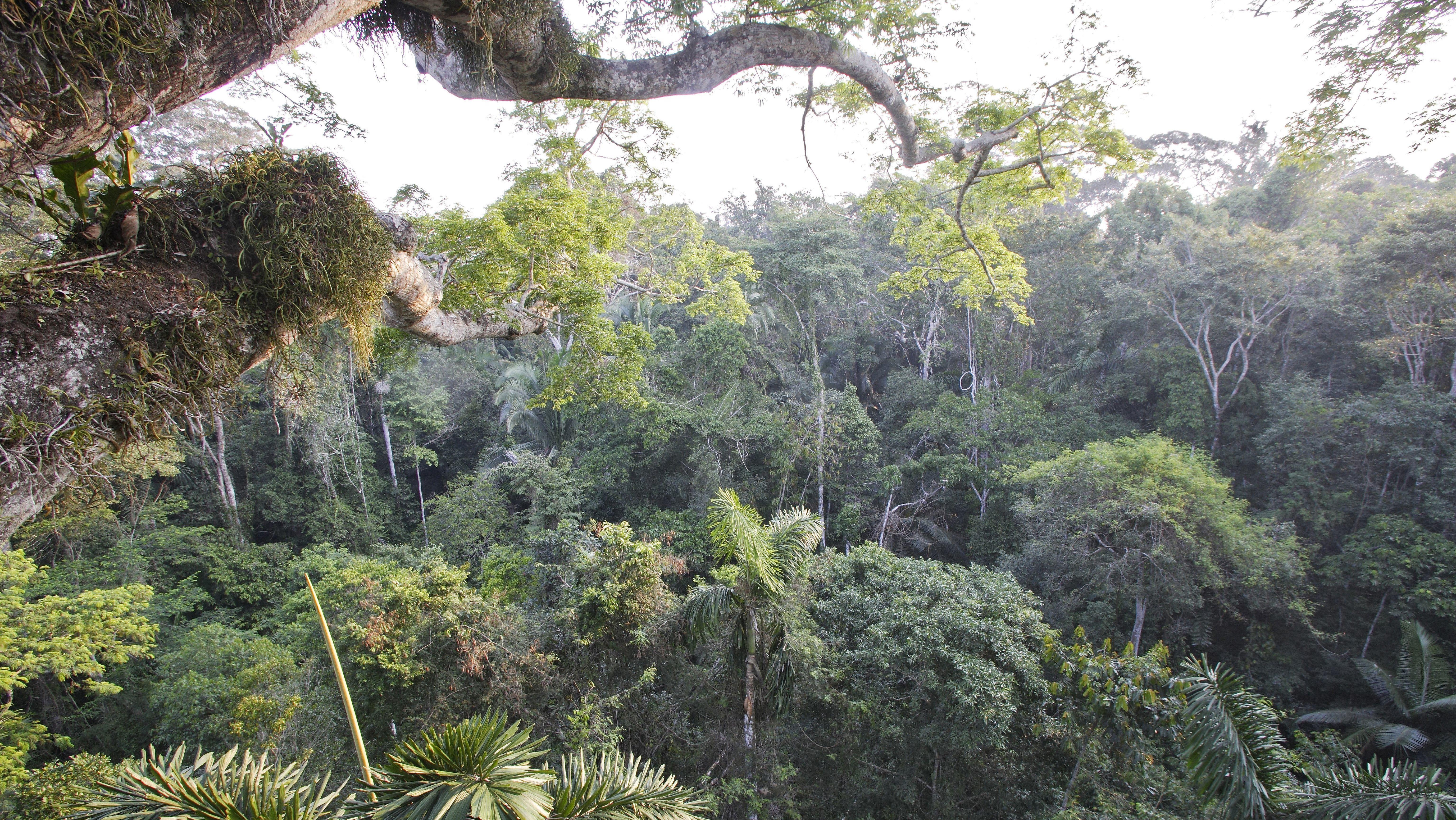 Der tropischer Regenwald im Manu Nationalpark ist Teil des peruanischen Amazonas-Gebiets.
