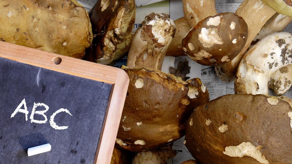 Das Pilze-Abc