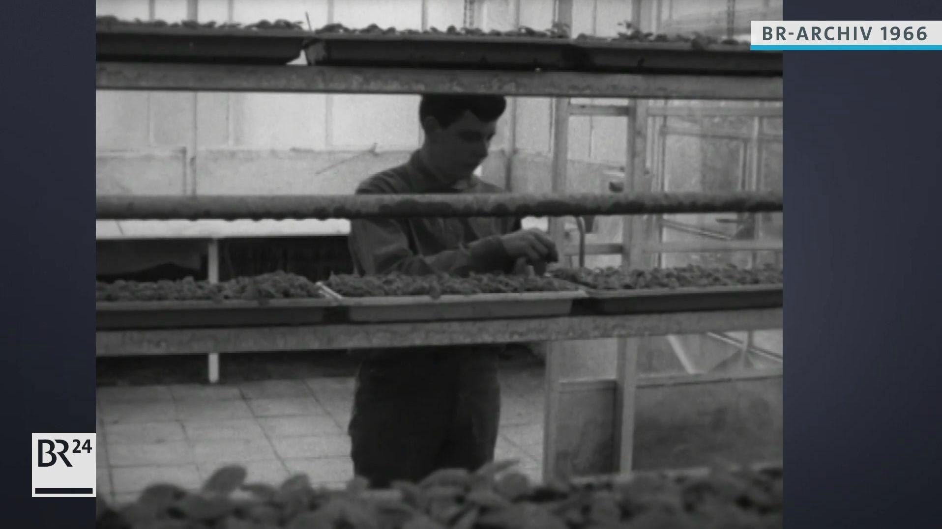Gärtner bei der Arbeit im Turmgewächshaus
