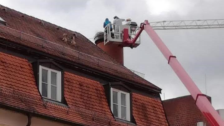Bergung des Storchs mit Hilfe einer Baumpflegefirma