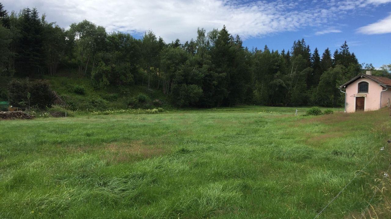 Der Wald hinter der Wiese soll für die geplante Sandgrube gerodet werden
